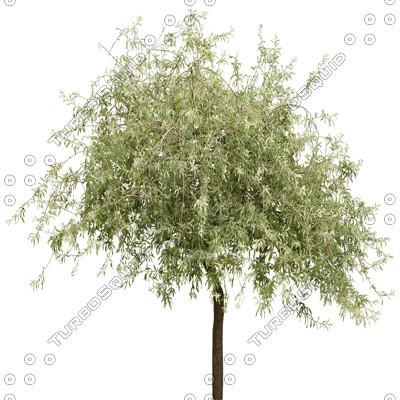 Tree_16.tga