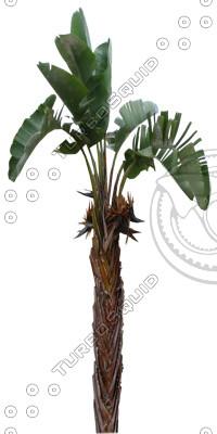 Palm_30.tga
