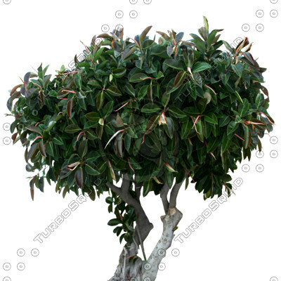 Tree_tropic_07.tga