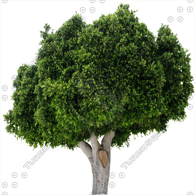 Tree_15.tga