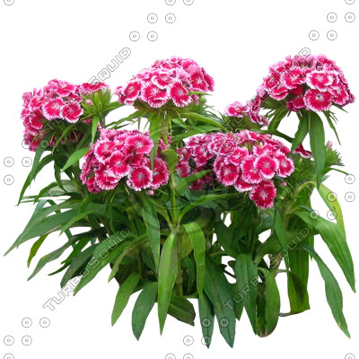 Flower_H_10.tga