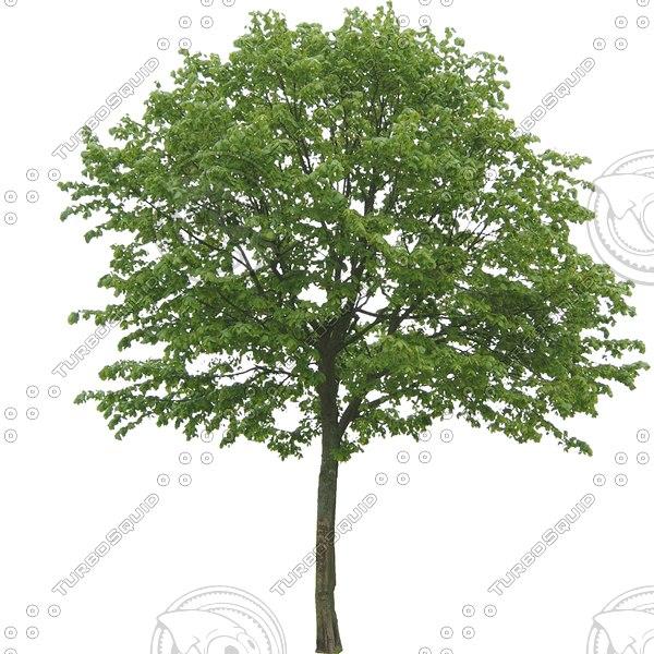PLNT010 tree billboard texture