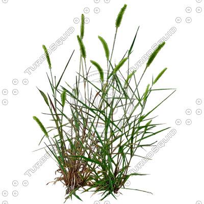 Grass_19.tga