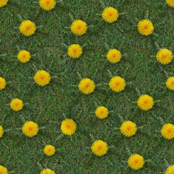 G315 grass flowers dandelions picture