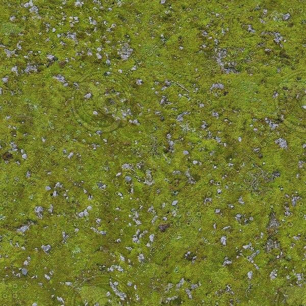 G174 mossy ground stone
