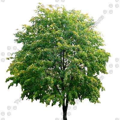 Tree_N_4.tga
