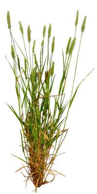 Grass_20.tga