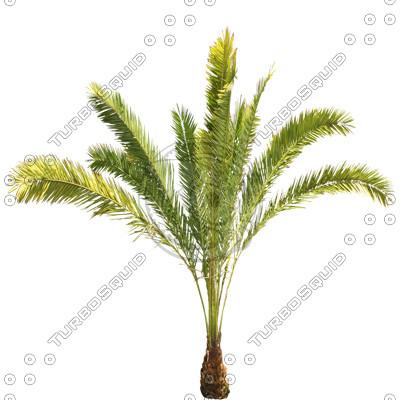 Palm_11.tga