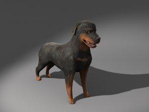 max rottweiler dog