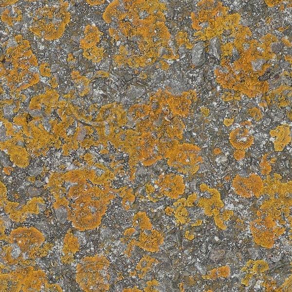 RS109 lichen mossy rock texture