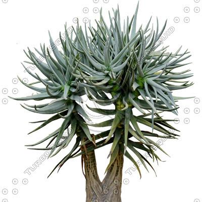 Desert_plants_13.tga