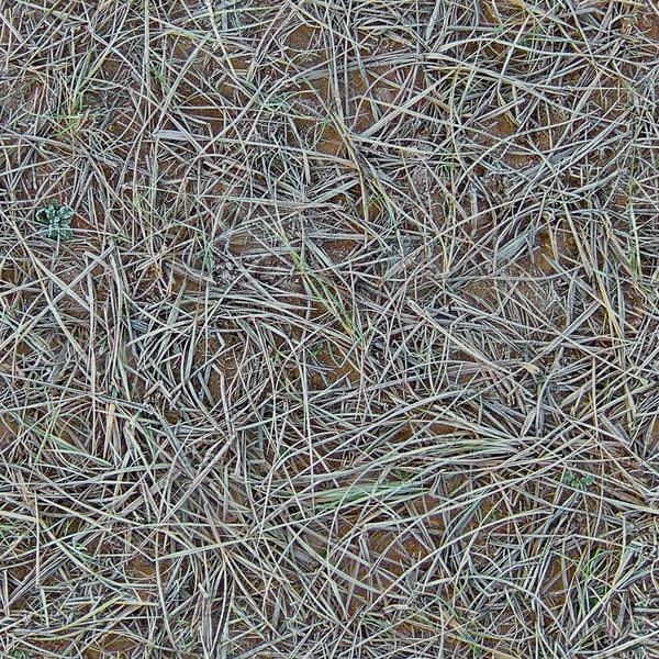 G292 frosty beach grass texture