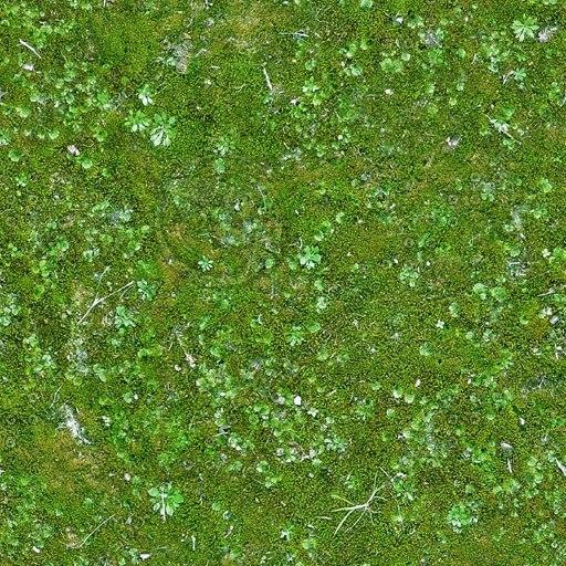 G344 mossy grass moss