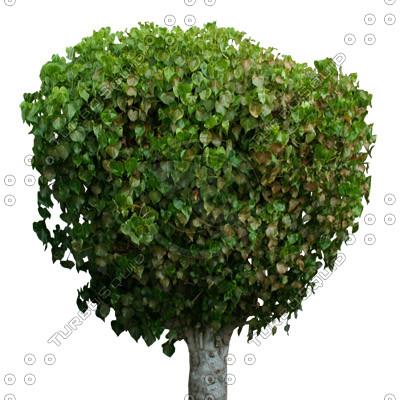 Tree_tropic_18 .tga