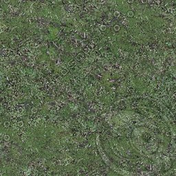 UPG07 mossy grassy weedy ground texture