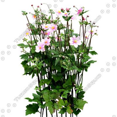 Flowers_N_10.tga