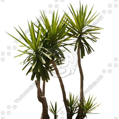 Palm_N_03.tga