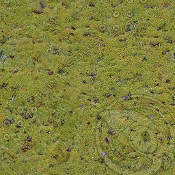 UPG21 mossy ground game texture
