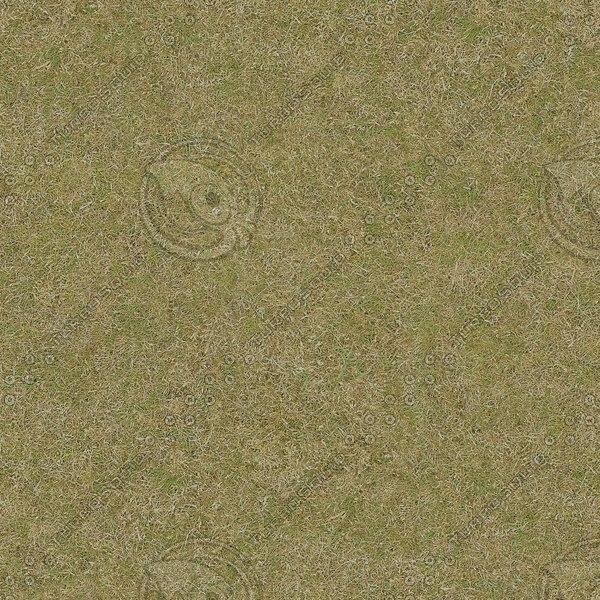 G385 grass turf texture