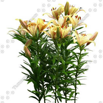 Flowers_N_02.tga