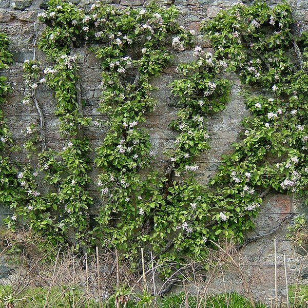 W112 overgrown stone wall texture