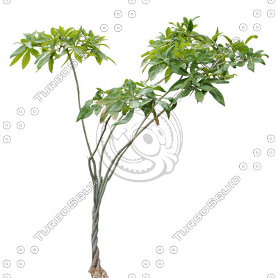 Tree_tropic_08.tga