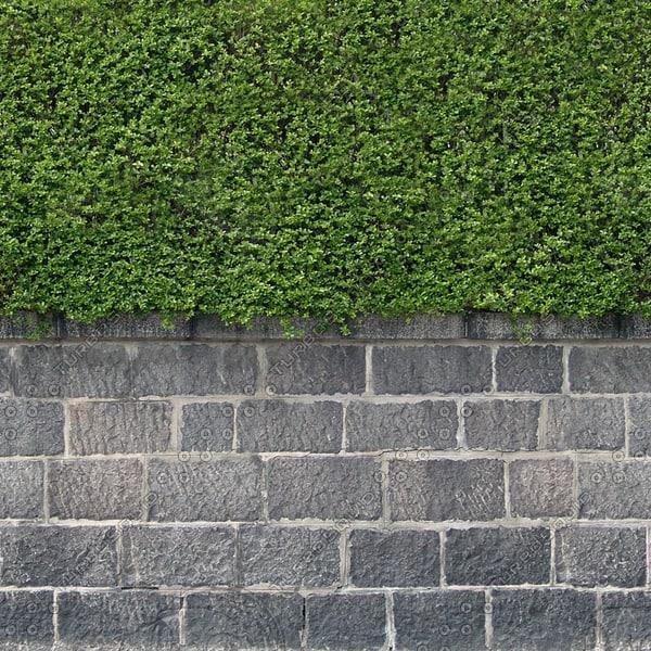 H010 privet hedge wall texture
