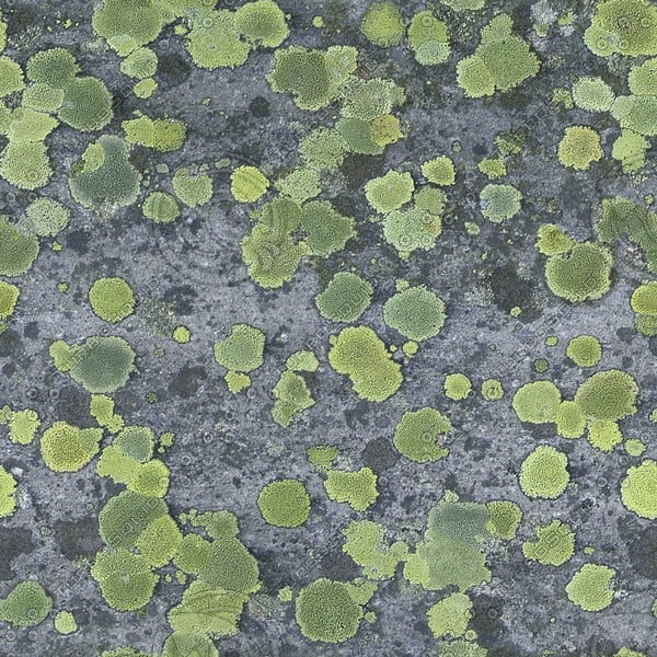 RS050 mossy rock stone texture