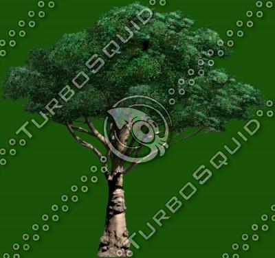 tree_02.tga