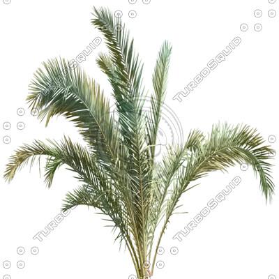 Branch_palm_2.tga