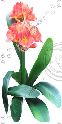Flower_1.tga