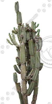 Desert_plants_18.tga