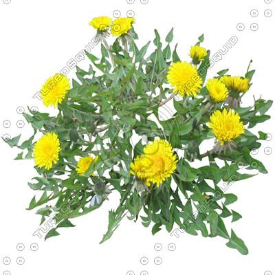 FlowerL_Dandelion_01.tga