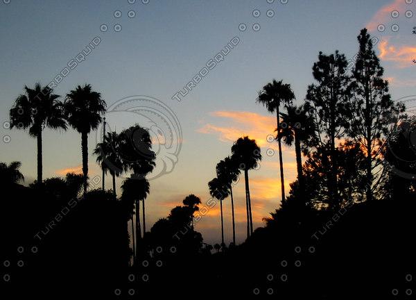 PV Sunset Palms 1857.jpg