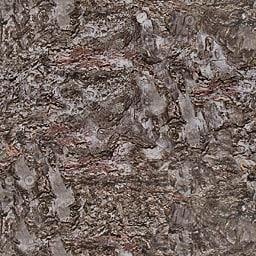 UPTBRK02 tree bark texture