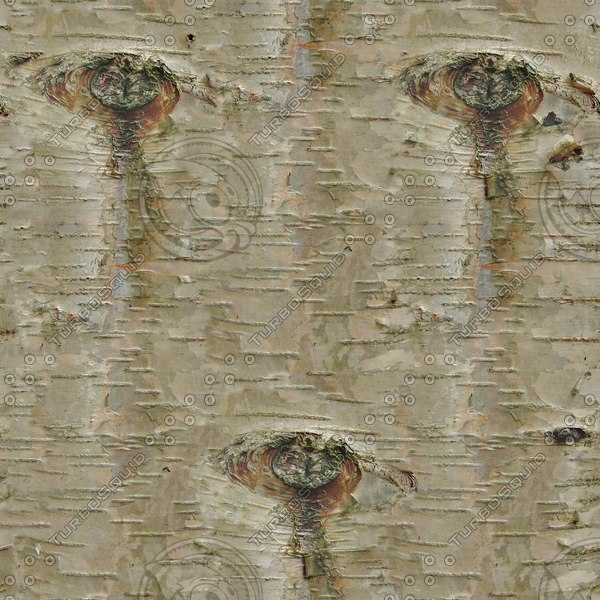 BRKT024 birch tree bark texture image