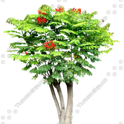 Tree_tropic_11.tga
