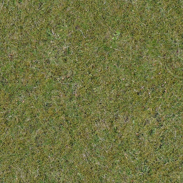 G313 mossy grass picture