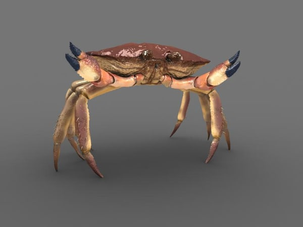 crab animate 3d model