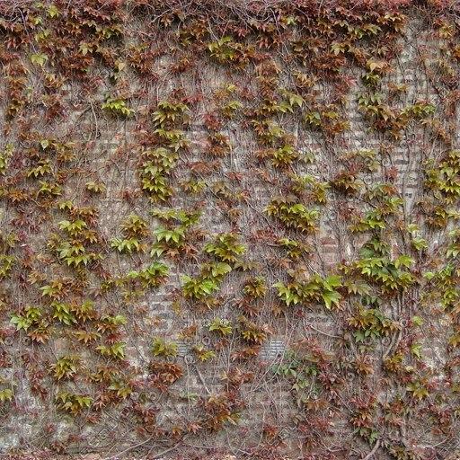 W288 brick wall ivy texture 1024 512