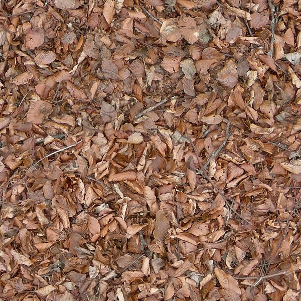 G310 forest floor dead leaves and twigs