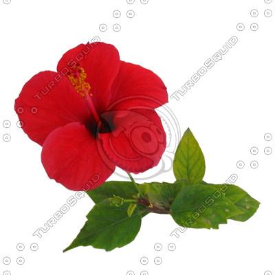Flower_N_35.tga