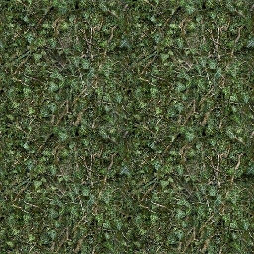 IV002 tree bark climbing ivy texture