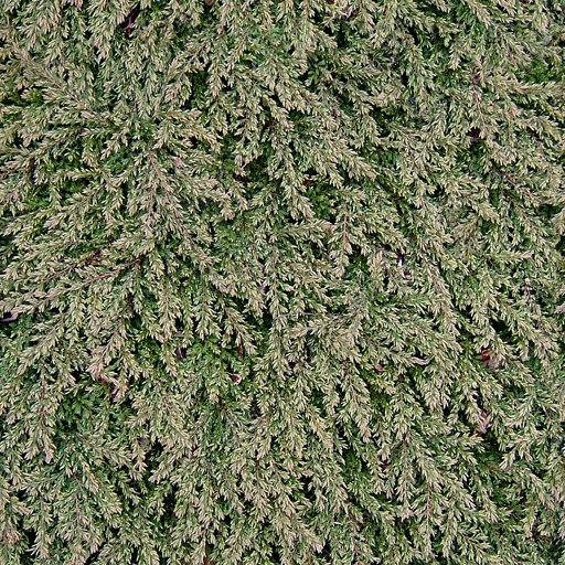 H012 hedge hedgerow bush texture