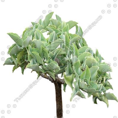 Tree_tropic_16.tga