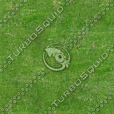 grassfield1.tga