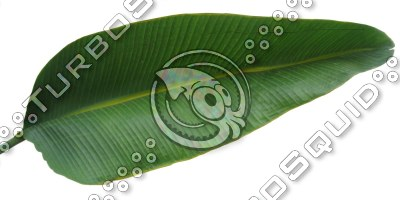LeafL_palm_04.tga