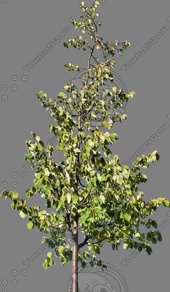 tree35