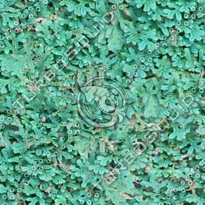 GroundCover-HI_Tiles_MR.tga