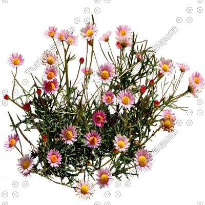 Flower_H_13.tga